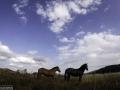 divlji-konji-pored-mtb-staze